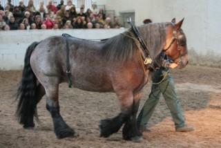 Présentation du cheval de trait