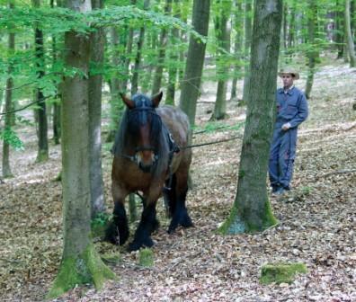 Maniabilité en forêt